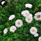 Buy White Callistephus Flower Seeds 400pcs Plant Flower Callistephus Chinensis