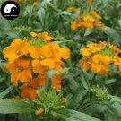 Buy Siberian Wallflower Flower Seeds 100pcs Plant Flower Cheiranthus Cheiri