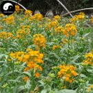 Buy Siberian Wallflower Flower Seeds 400pcs Plant Flower Cheiranthus Cheiri