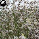 Buy Limonium Bicolor Flower Seeds 240pcs Plant Flower Limonium Bicolor