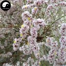 Buy Limonium Bicolor Flower Seeds 120pcs Plant Flower Limonium Bicolor
