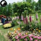 Buy Digitalis Purpurea Flower Seeds 400pcs Plant Flower Digitalis Purpurea