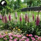 Buy Digitalis Purpurea Flower Seeds 200pcs Plant Flower Digitalis Purpurea