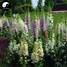Buy Digitalis Purpurea Flower Seeds 100pcs Plant Flower Digitalis Purpurea