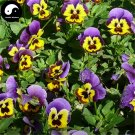 Buy Viola Tricolor Flower Seeds 400pcs Plant Pansy Flower Viola Tricolor