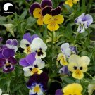 Buy Viola Tricolor Flower Seeds 200pcs Plant Pansy Flower Viola Tricolor