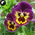 Buy Viola Tricolor Flower Seeds 100pcs Plant Pansy Flower Viola Tricolor