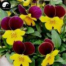 Buy Viola Cornuta Flower Seeds 400pcs Plant Viola Cornuta Flower Garden