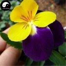 Buy Viola Cornuta Flower Seeds 100pcs Plant Viola Cornuta Flower Garden