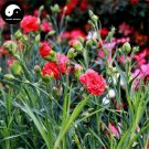 Buy Perpetual Carnation Flower Seeds 360pcs Plant Dianthus Caryophyllus Flower