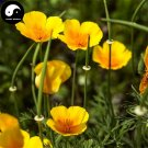 Buy Eschscholtzia Californica Flower Seeds 200pcs Plant California Poppy Flower