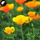 Buy Eschscholtzia Californica Flower Seeds 100pcs Plant California Poppy Flower