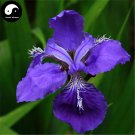Buy Blue Butterfly Flower Seeds 60pcs Plant Iris Tectorum Flower Garden