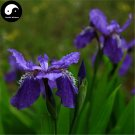 Buy Blue Butterfly Flower Seeds 120pcs Plant Iris Tectorum Flower Garden