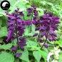 Buy Purple Salvia Splendens Flower Seeds 320pcs Plant Salvia Splendens Flower
