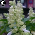 Buy White Salvia Splendens Flower Seeds 160pcs Plant Salvia Splendens Flower