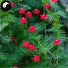 Buy Quamoclit Pennata Flower Seeds 60pcs Plant Vine Flower Quamoclit Pennata