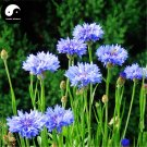Buy Centaurea Cyanus Flower Seeds 400pcs Plant Flower Cornflower Garden