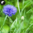 Buy Centaurea Cyanus Flower Seeds 100pcs Plant Flower Cornflower Garden