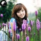 Buy Liatris Spicata Flower Seeds 100pcs Plant Flower Liatris Spicata Garden