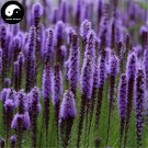 Buy Liatris Spicata Flower Seeds 400pcs Plant Flower Liatris Spicata Garden