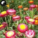 Buy Helichrysum Bracteatum Flower Seeds 400pcs Plant Helichrysum Bracteatum