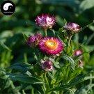 Buy Helichrysum Bracteatum Flower Seeds 100pcs Plant Helichrysum Bracteatum