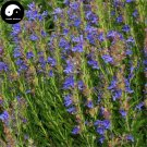 Buy Hyssop Grass Flower Seeds 400pcs Plant Blue Flower Hyssop Garden