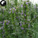 Buy Hyssop Grass Flower Seeds 200pcs Plant Blue Flower Hyssop Garden