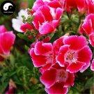 Buy Godetia Amoena Flower Seeds 400pcs Plant Flower Godetia Amoena Garden