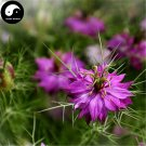 Buy Love-in-a-mist Flower Seeds 160pcs Plant Flower Nigella Damascena Garden
