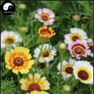 Buy Chrysanthemum Carinatum Flower Seeds 400pcs Plant Chrysanthemum Carinatum