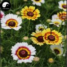 Buy Chrysanthemum Carinatum Flower Seeds 100pcs Plant Chrysanthemum Carinatum