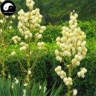 Buy Gladiolus Flower Seeds 15pcs Plant Gladiolus Gandavensis Flower Garden