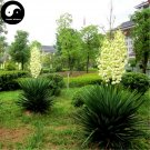 Buy Gladiolus Flower Seeds 30pcs Plant Gladiolus Gandavensis Flower Garden