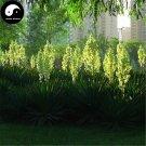 Buy Gladiolus Flower Seeds 60pcs Plant Gladiolus Gandavensis Flower Garden