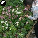 Buy Aquilegia Viridiflora Flower Seeds 400pcs Plant Aquilegia Viridiflora Flower