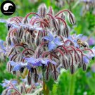 Buy Borage Flower Seeds 180pcs Plant Borago Officinalis Flower Garden