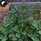 Buy Borage Flower Seeds 360pcs Plant Borago Officinalis Flower Garden