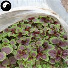 Buy Leaf Amaranth Vegetable Seeds 800pcs Plant Vegetables Amaranthus Tricolor