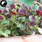 Buy Leaf Amaranth Vegetable Seeds 400pcs Plant Vegetables Amaranthus Tricolor