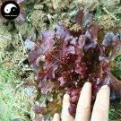 Buy Purple Leaf Lactuca Vegetable Seeds 300pcs Plant Salad Vegetables Lettuce