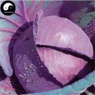 Buy Purple Leaf Cabbage Vegetable Seeds 300pcs Plant Brassica Oleracea