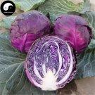 Buy Purple Leaf Cabbage Vegetable Seeds 600pcs Plant Brassica Oleracea