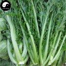 Buy Brassica Juncea Vegetable Seeds 1200pcs Plant Leaf Brassica Juncea