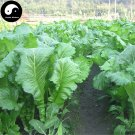 Buy Brassica Juncea Vegetable Seeds 1200pcs Plant Large Leaf Brassica Juncea Jie Cai