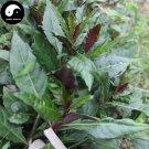 Buy Blood Dishes Vegetable Seeds 600pcs Plant Leaf Vegetable Gynura Bicolor