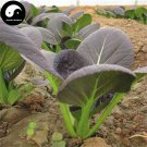 Buy Purple Leaf Brassica Chinensi Vegetable Seeds 800pcs Plant Vegetable Brassica Chinensi