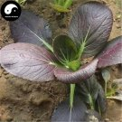 Buy Purple Leaf Brassica Chinensi Vegetable Seeds 400pcs Plant Vegetable Brassica Chinensi
