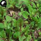 Buy Spinacia Oleracea Vegetable Seeds 600pcs Plant Vegetable Spinacia